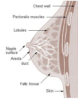 hiit for fat loss treadmill